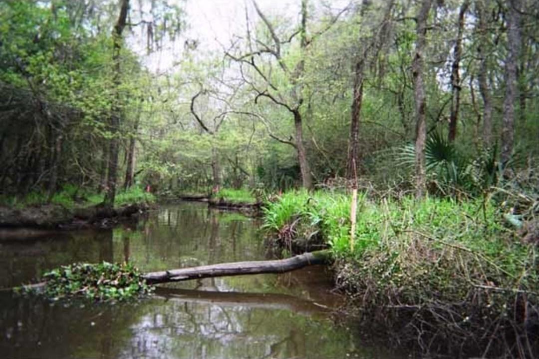 Armand Bayou Nature Center Classes