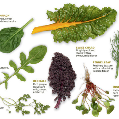 Leaf lettuce01 mkfvyb