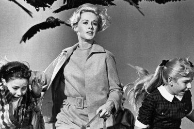 Birds 1963 1 mzessq
