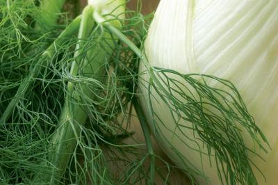 0707 pg159 savor fennel zucanq