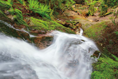 Cougar mountain park seattle trails xgmh10