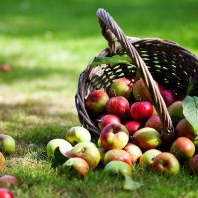 8 6 13 apples yakima kati molin w4jnaj