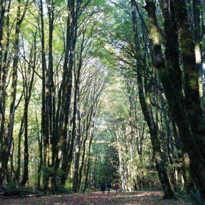 Forest park portland oregon qmpb9c