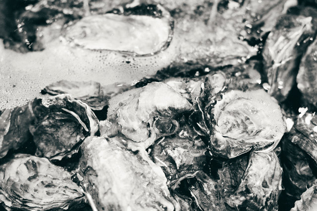 0213 seafood extra oysters a69gor