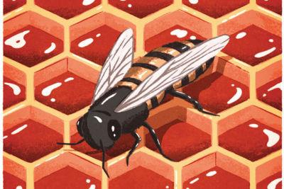 Beehive illustration ooccfl