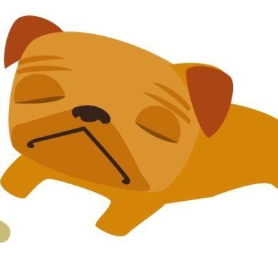Pug sleeping pekq6r
