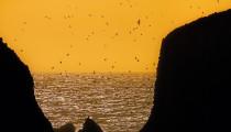 Thumbnail for - The Hidden Coast