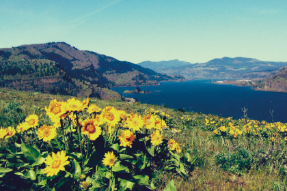 Thumbnail for - Trail of the Month: Mosier Plateau