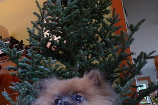 Stumpy with fir ue0pk8