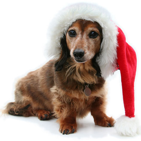 Christmasdog qvertt
