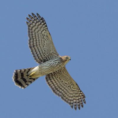 Hawk greg lavaty isc6jv