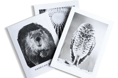 2015 animalia design stationery pvedvk