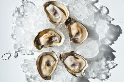 1213 nw oyster y8xr7l