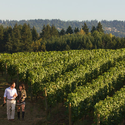 037 wine hawks view cellars horiz uzskhi