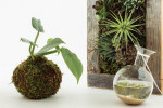Thumbnail for - The Next Generation of Houseplants and Terrariums