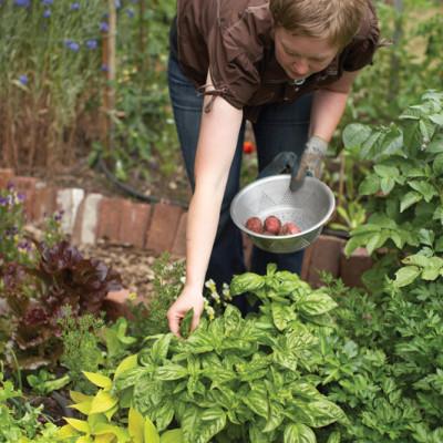 Ediblegarden1 kakdvv