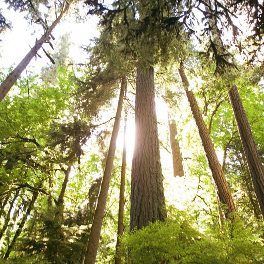 Clackamas mount talbert nature park tgyafp
