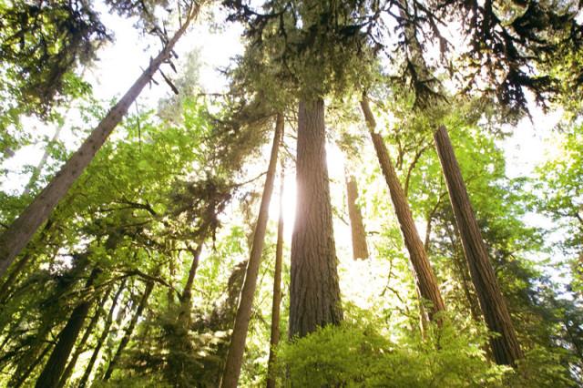 clackamas mount talbert nature park