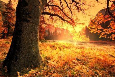 Galyna andrushko oregon foliage p1npd6