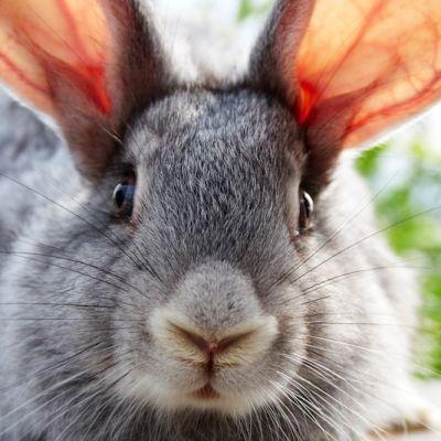 Pressmaster bunny ssetcx