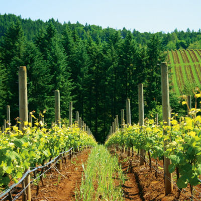 038 wine argyle winery vxges0