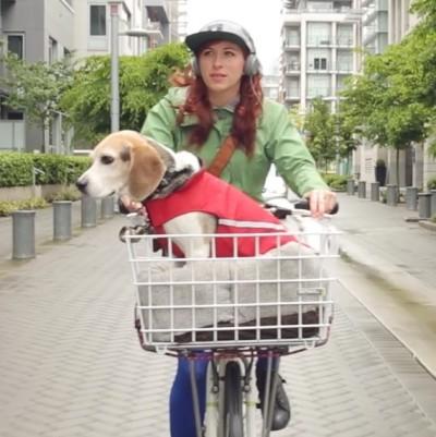 Companionship dog front ve2l9v