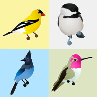 jarrett's birds