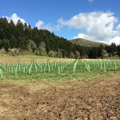Applegate vineyard jessica applegate brown luka2o