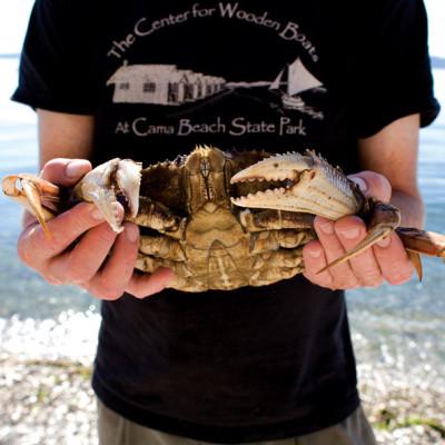 Cama beach crab ulelnj