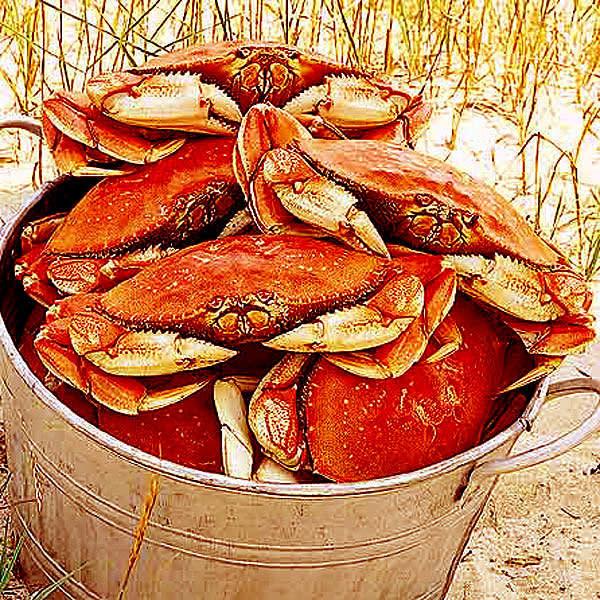 Dungeness crab 600 asomgm