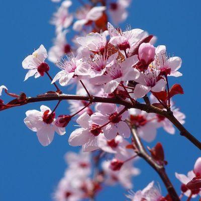 04 13 blossom uwcsyf