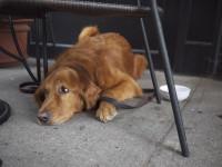 doggie-1