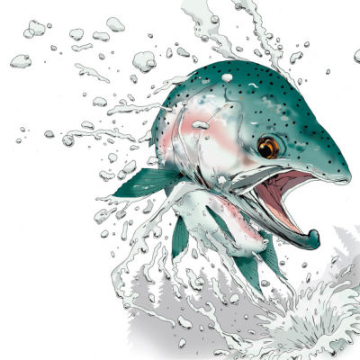 0213 fish steelhead to entree fbkkbu