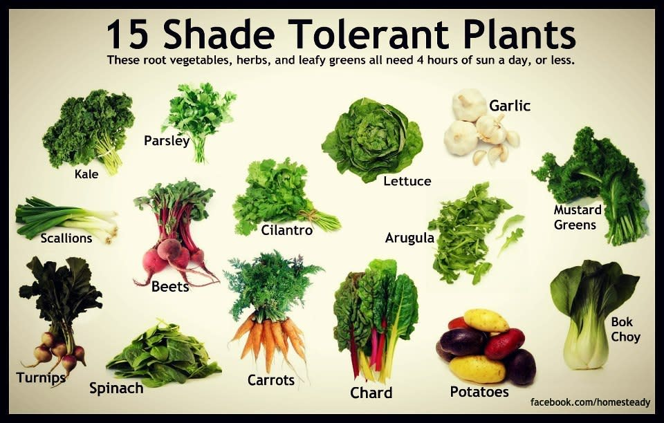 shade tolerant vegetables - Vegetable Garden Ideas For Shaded Areas