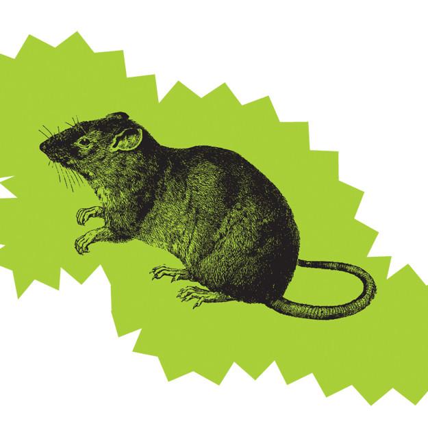 Mouse oxkqni