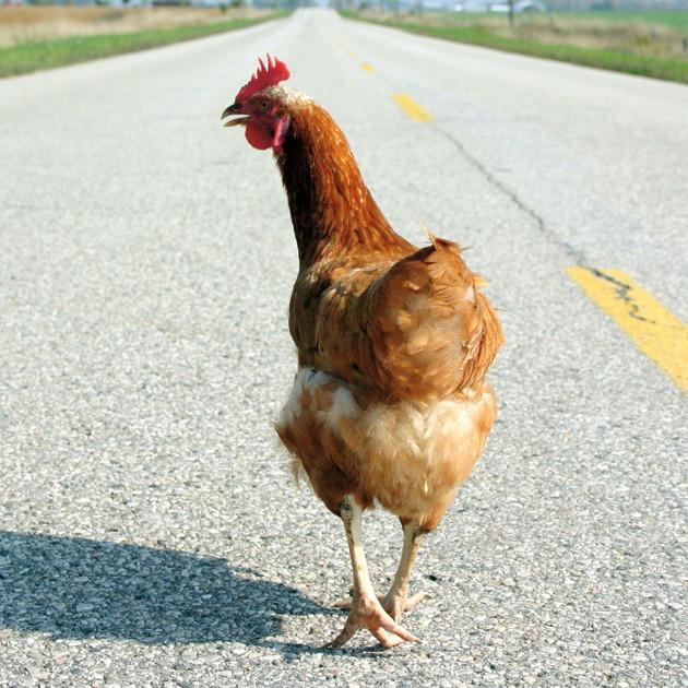 Chicken road foodie getaways tescbl