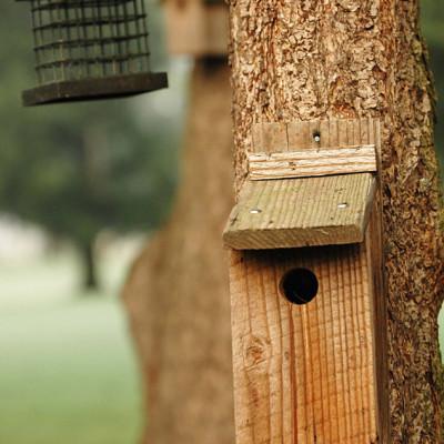 Birdhouseimage webready bgiv6b