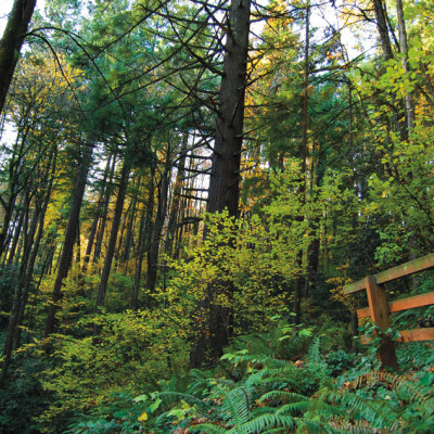 Forest park wildwood bridge t7jpze