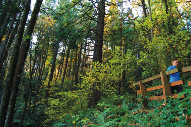 Forest Park Wildwood Bridge