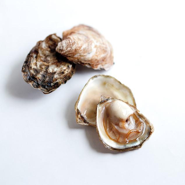Olympia oysters gupenu