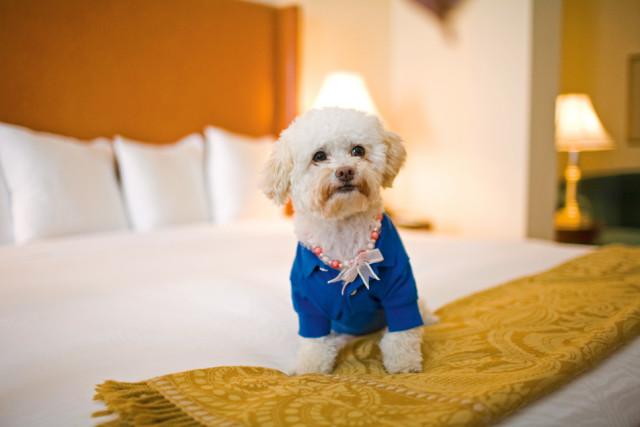 pets1-suite life