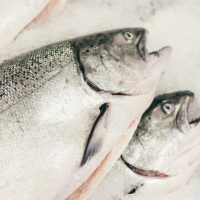 0213 ednote fish w41mfu