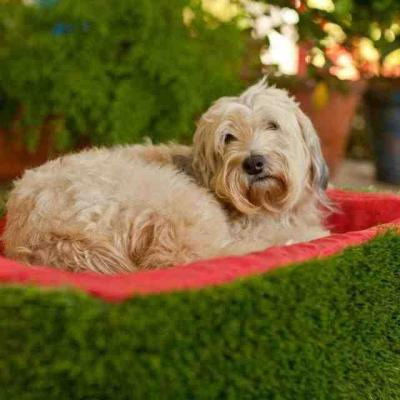 4.13 firmly planted turf dog bed ulovpq