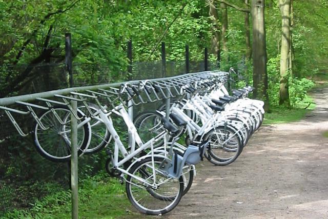 Witte fietsen de hoge veluwe zrje0h