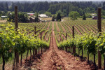 Thumbnail for - Memorial Day Weekend at Willamette Valley Wineries