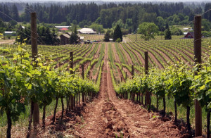 New tasting rooms in the Willamette Valley