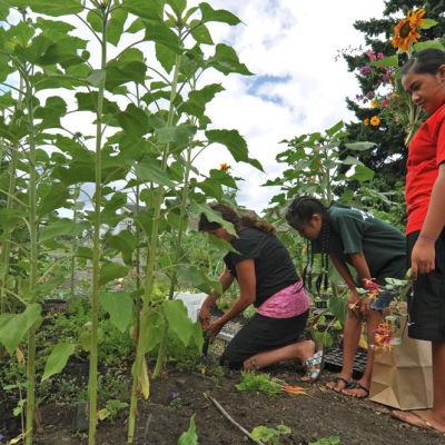 0912 vestal elementary garden rancsi
