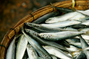 5 tips for choosing sustainable seafood