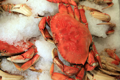 13 dungeness crab bar avignon wnthew