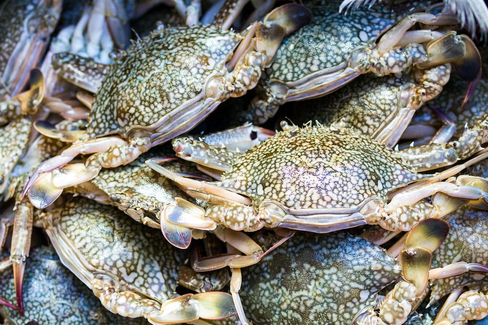 Recreational Blue Crabbing  myfwccom